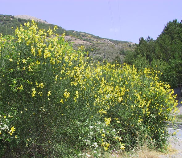 Ginestra outdoor image - Access to selected articles from 'Zëri i Arbëreshvet'